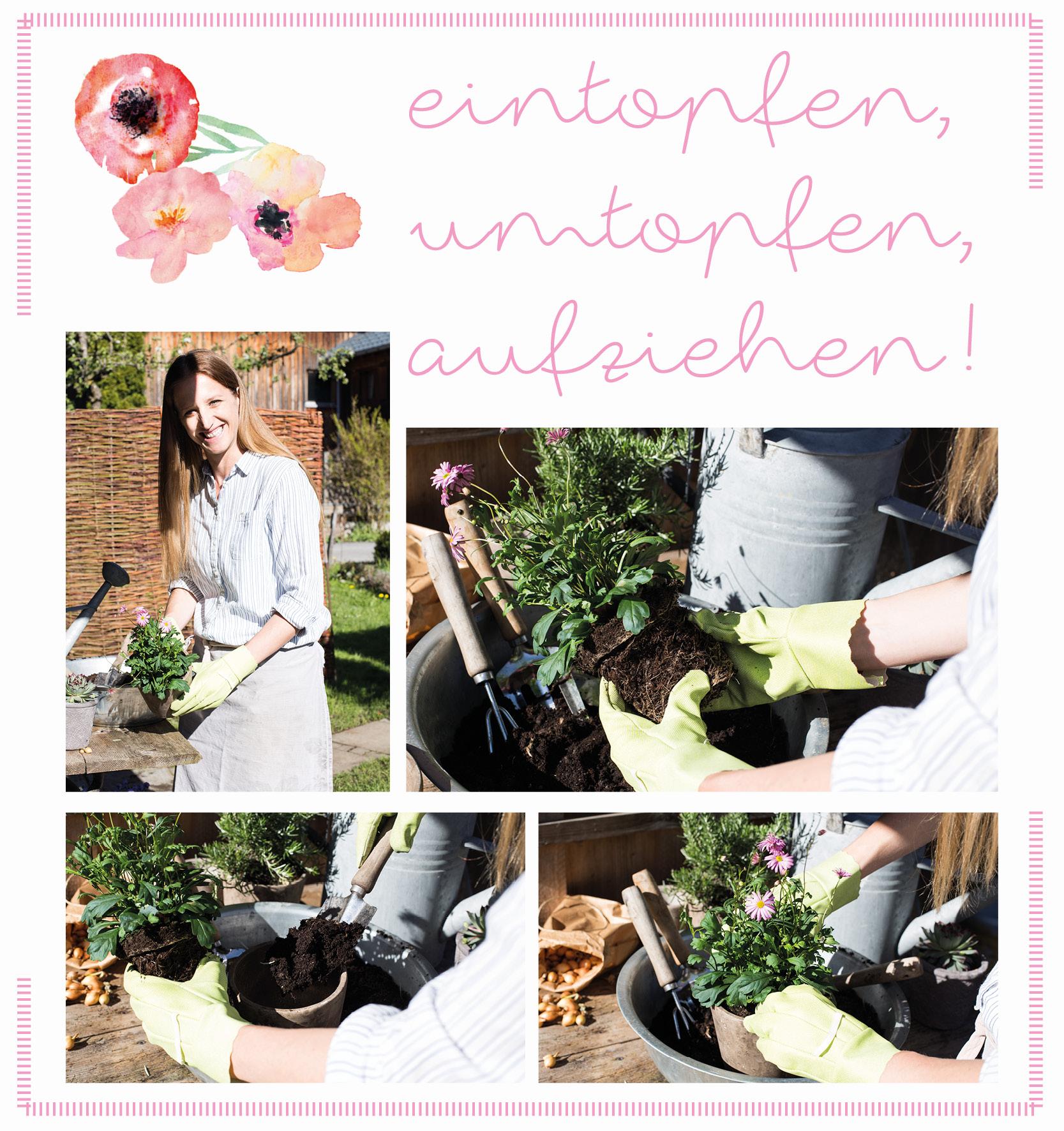 Gartentipps: eintopfen, umtopfen, aufziehen - Edith Klinger zeigt, wie's geht